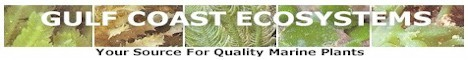 Sponsors of the Aquarist Club at USF for the 2011-2012 Academic Year GCEBanner